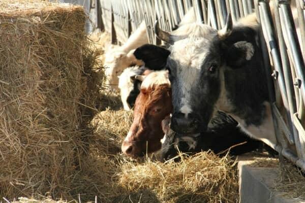 Farming Team Building