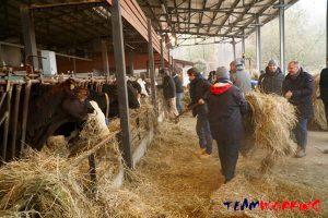 Lavoro in fattoria come team building