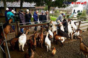 Attività con gli animali durante il team building in fattoria