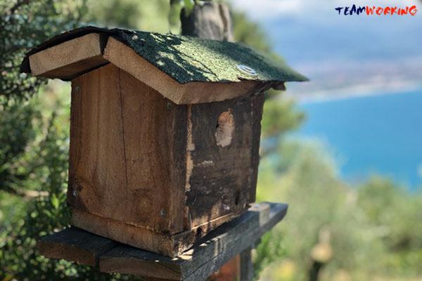 Team Building Sociale ed Ecologico: Birdhouse Building - casette per uccellini